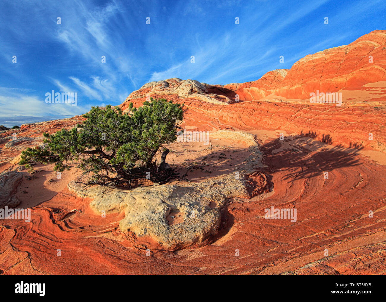 White Pocket in the Vermilion Cliffs National Monument, Arizona - Stock Image