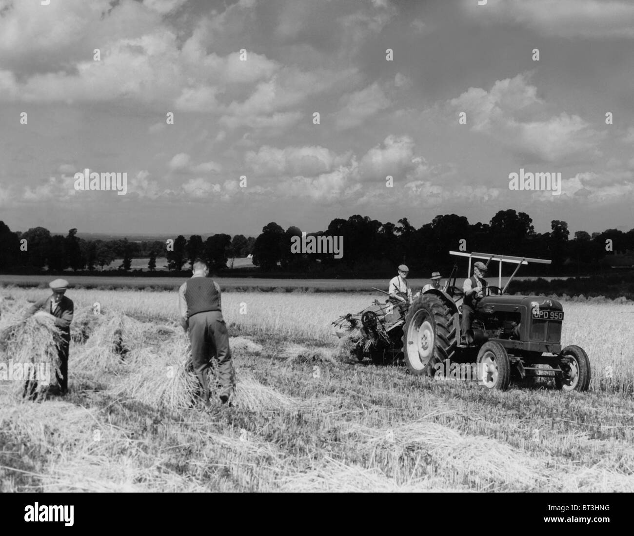 Vintage farming images from 1930's a binder working in the fields and later the making of a haystack - Stock Image