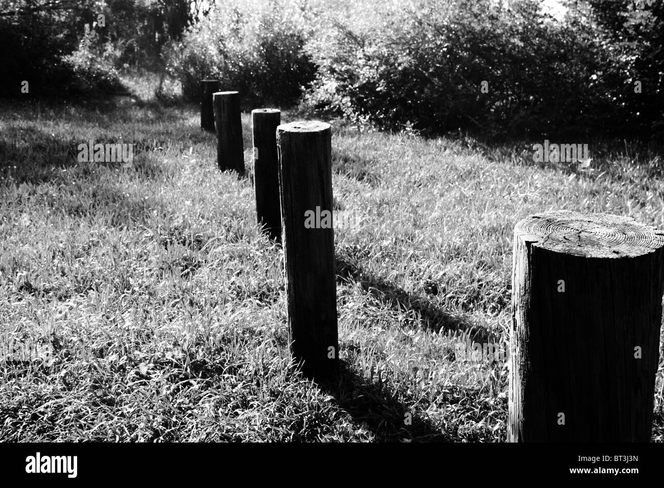 A line of wooden stumps in a secluded woodland area - Stock Image