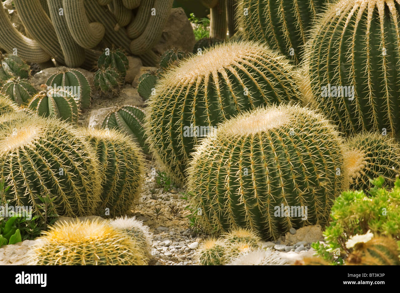 different cactus stock photos different cactus stock images alamy