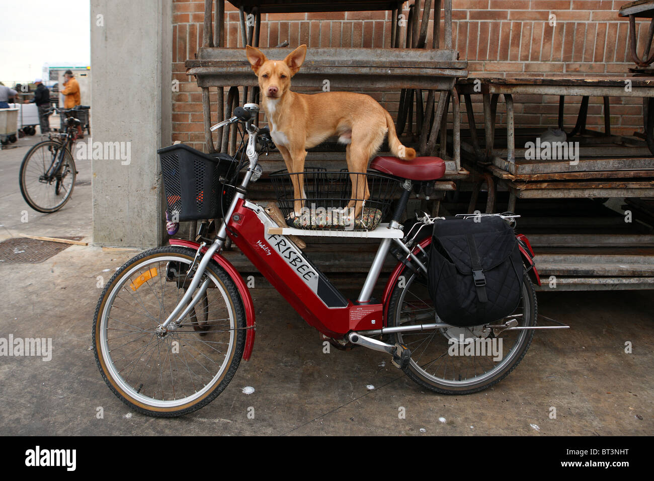 dog, dog on a motorcycle - Stock Image