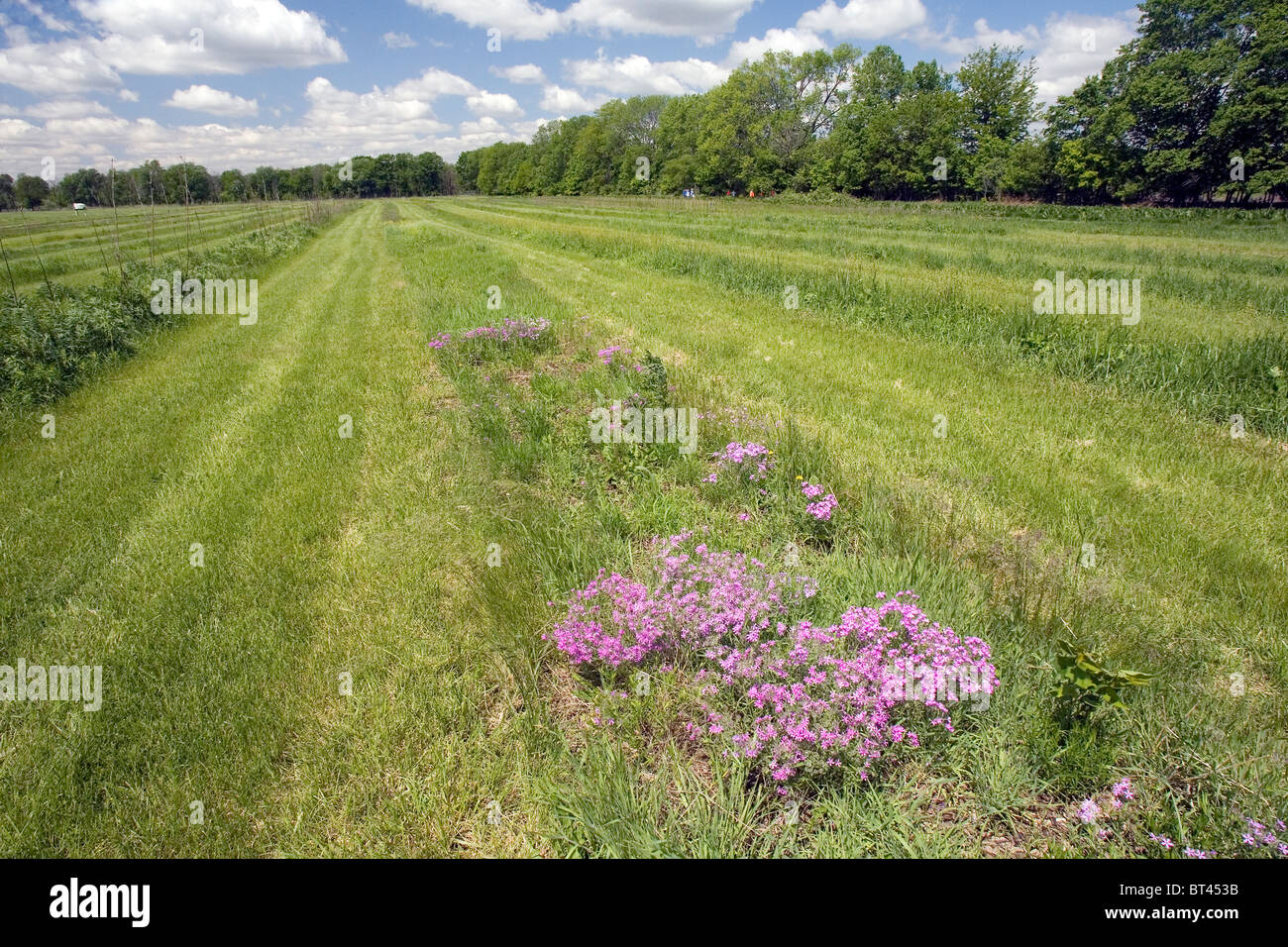 Native seed garden, Midewin National Tallgrass Prairie, Illinois, United States - Stock Image