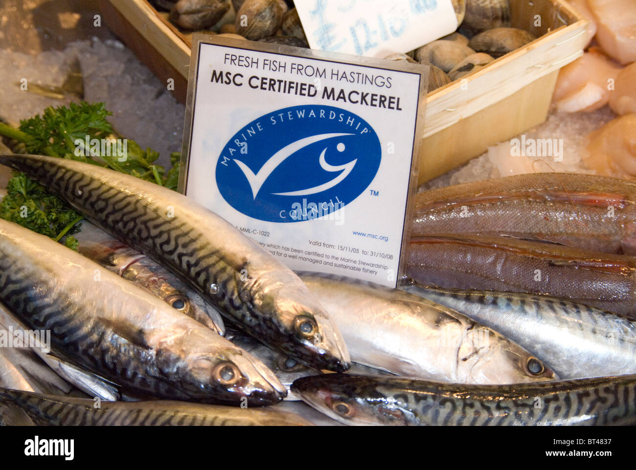 Fresh Hastings fish Marine Stewardship Council certified sustainable mackerel on sale at Rock-a-Nore Fisheries The - Stock Image