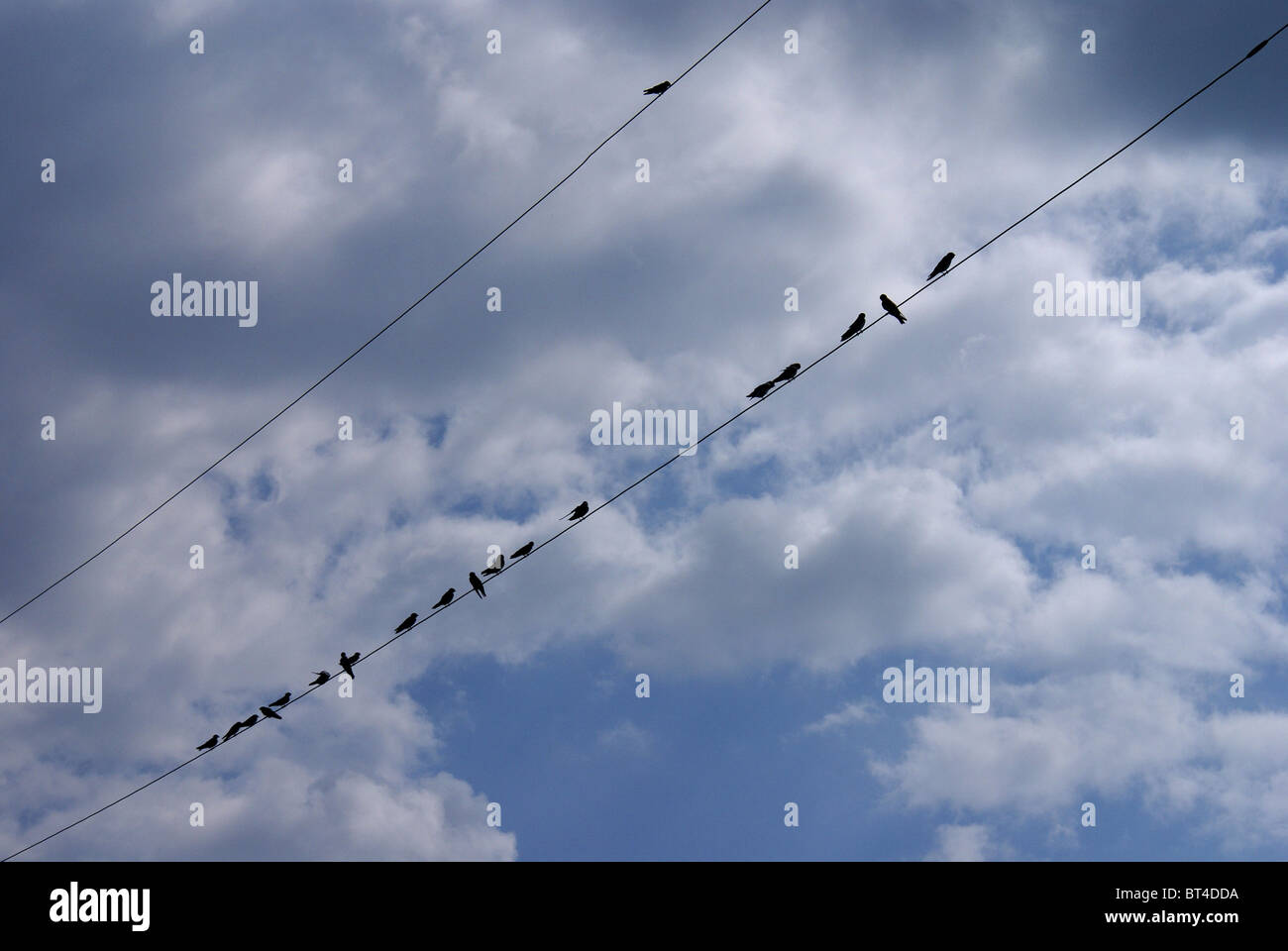 Birds On Wire - Stock Image