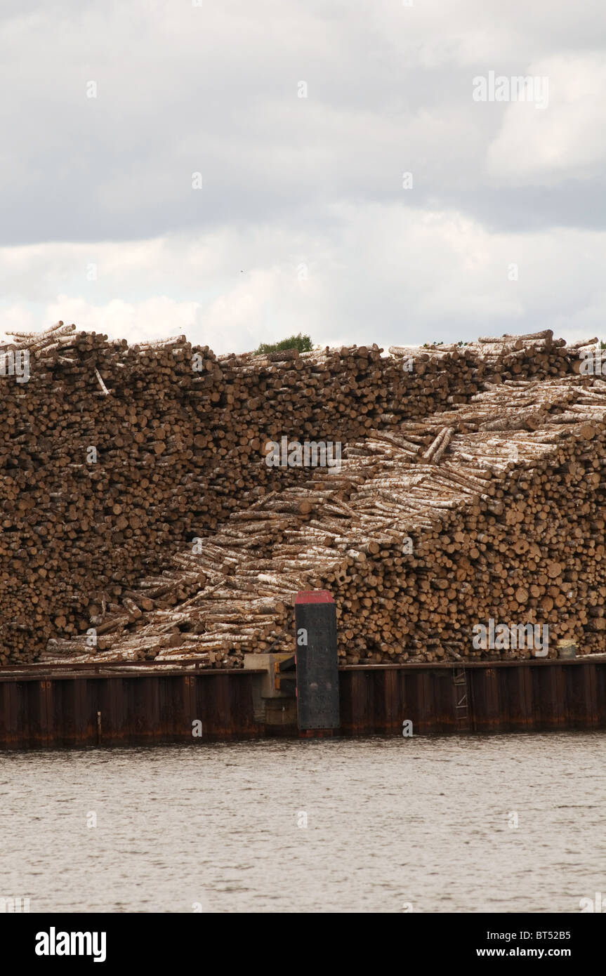 timber industry wood log logs trees yard logging export exporting exported sweden swedish resources lumberjack managed - Stock Image