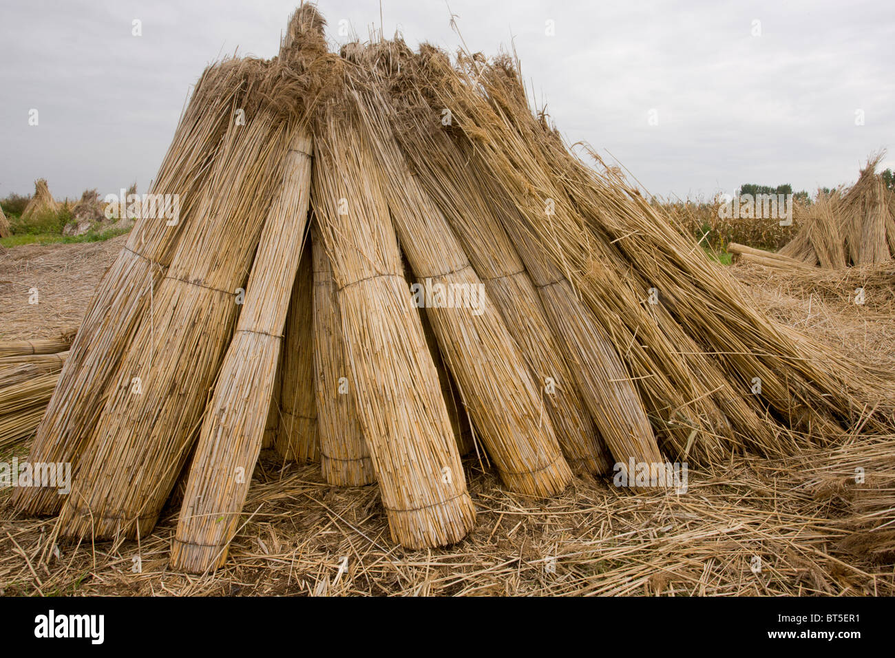 Reed-cutters yard on the plains of eastern Hungary, Hortobagy National Park, east Hungary - Stock Image