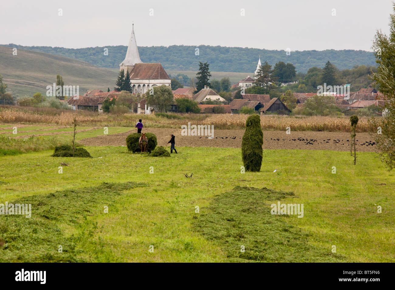 Hay collection by the saxon village of Soars, Transylvania, Romania - Stock Image