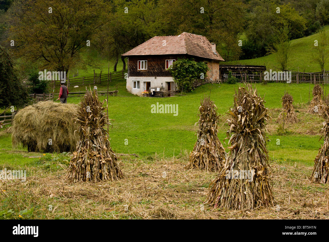 Old-fashioned traditional farming with hay cart and Maize stooks, near Garda de Sus, Apuseni Mountains, Romania - Stock Image