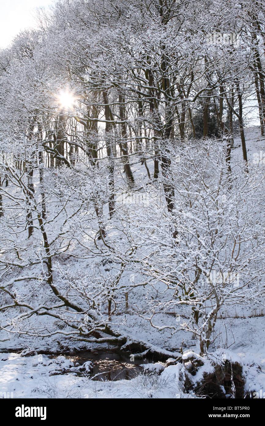 Sunlight through oak woodland in Winter. Powys, Wales. - Stock Image