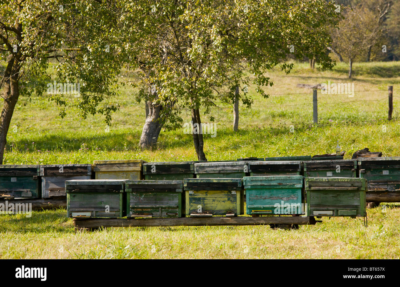 Bee-hives in orchard in the old saxon village of Crit, Transylvania, Romania - Stock Image