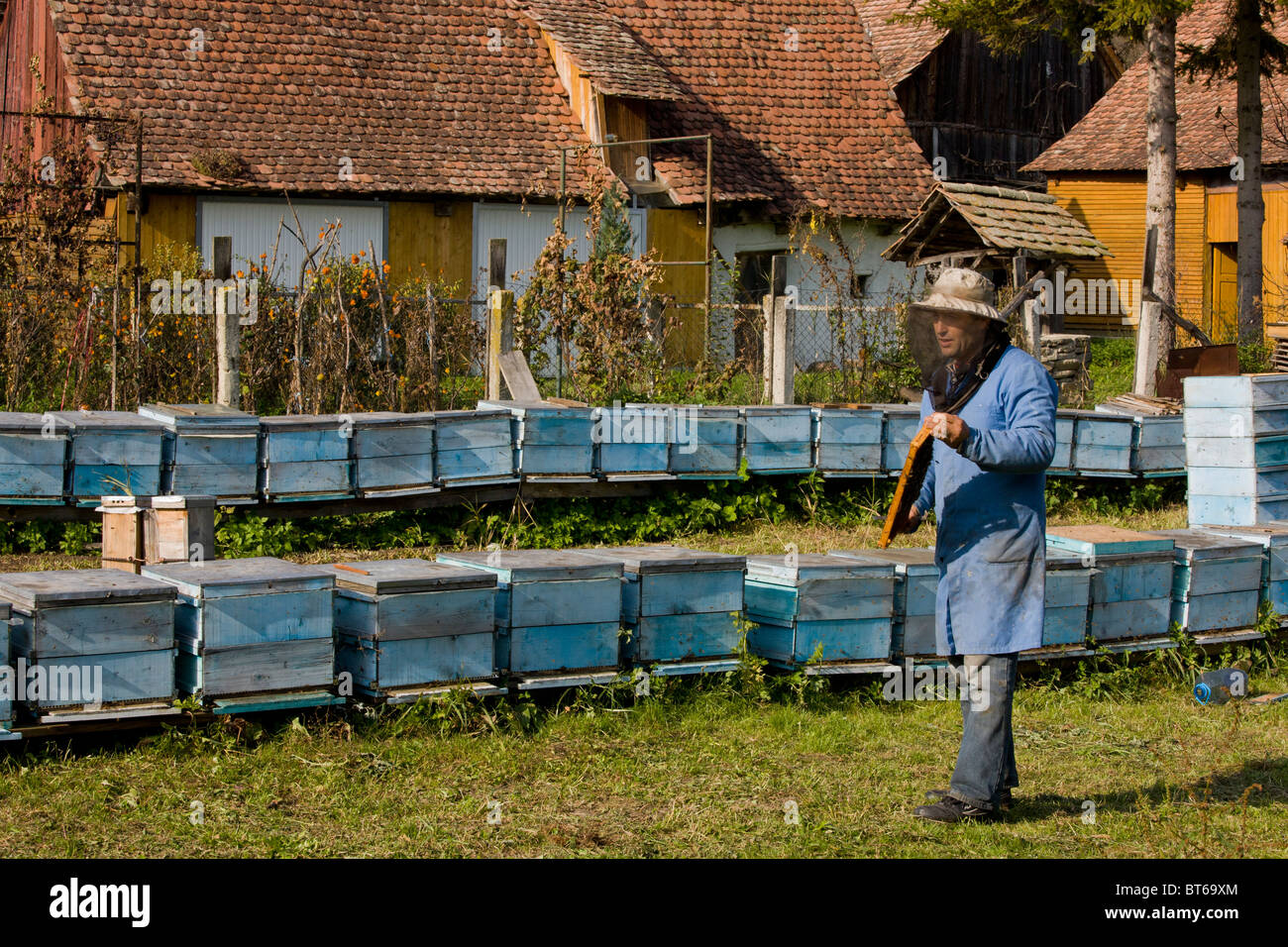 Bee-keeper among his hives in the old saxon village of Mesendorf, Transylvania, Romania - Stock Image