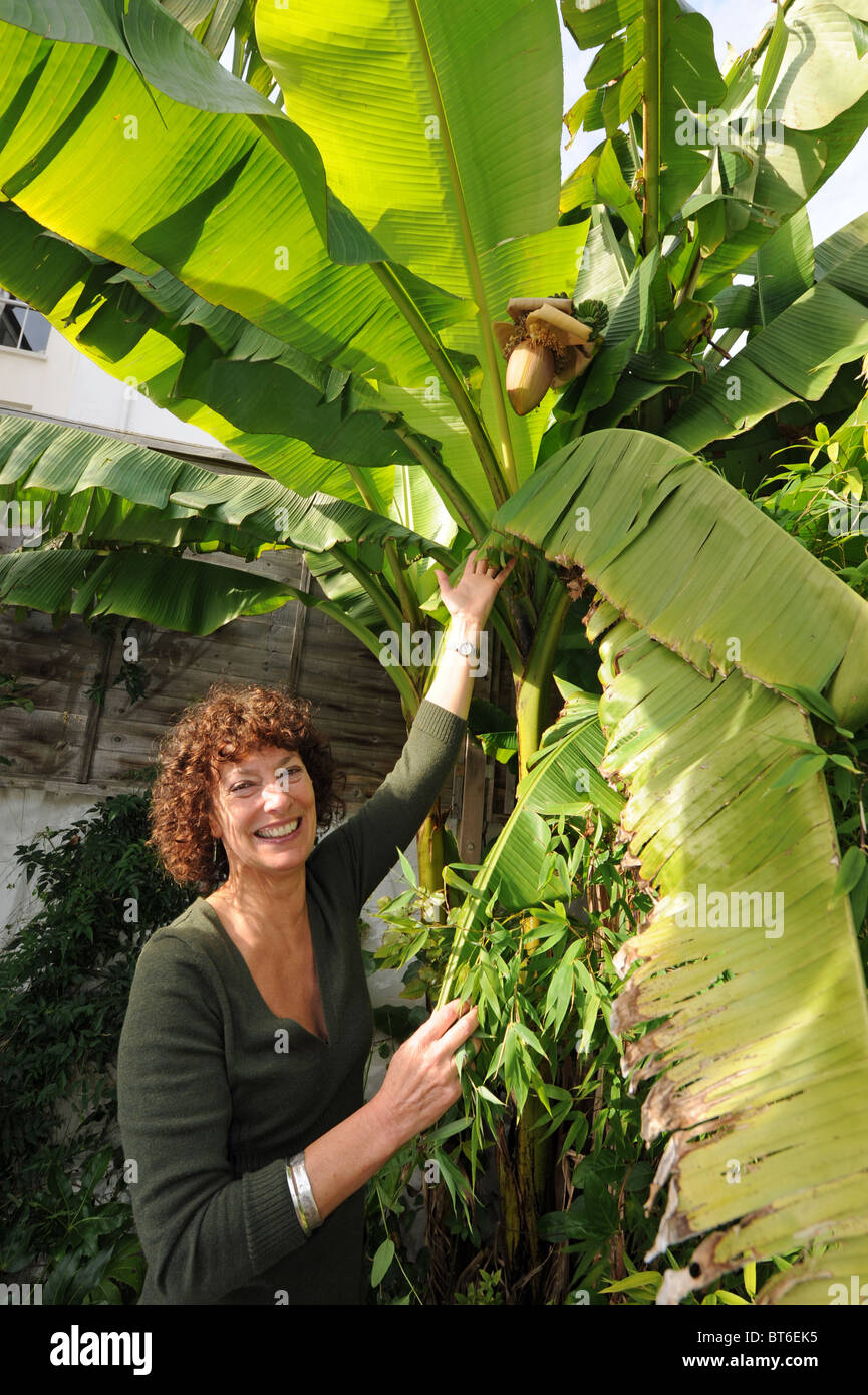 hilary masters with her musa basjoo tree or banana tree at her garden stock photo 32105337 alamy. Black Bedroom Furniture Sets. Home Design Ideas