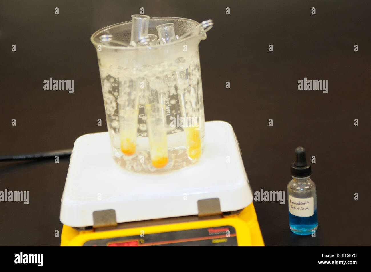 Benedict's Reagent test for sugar.  The yellow/orange color indicates sugar is present in the substance being - Stock Image