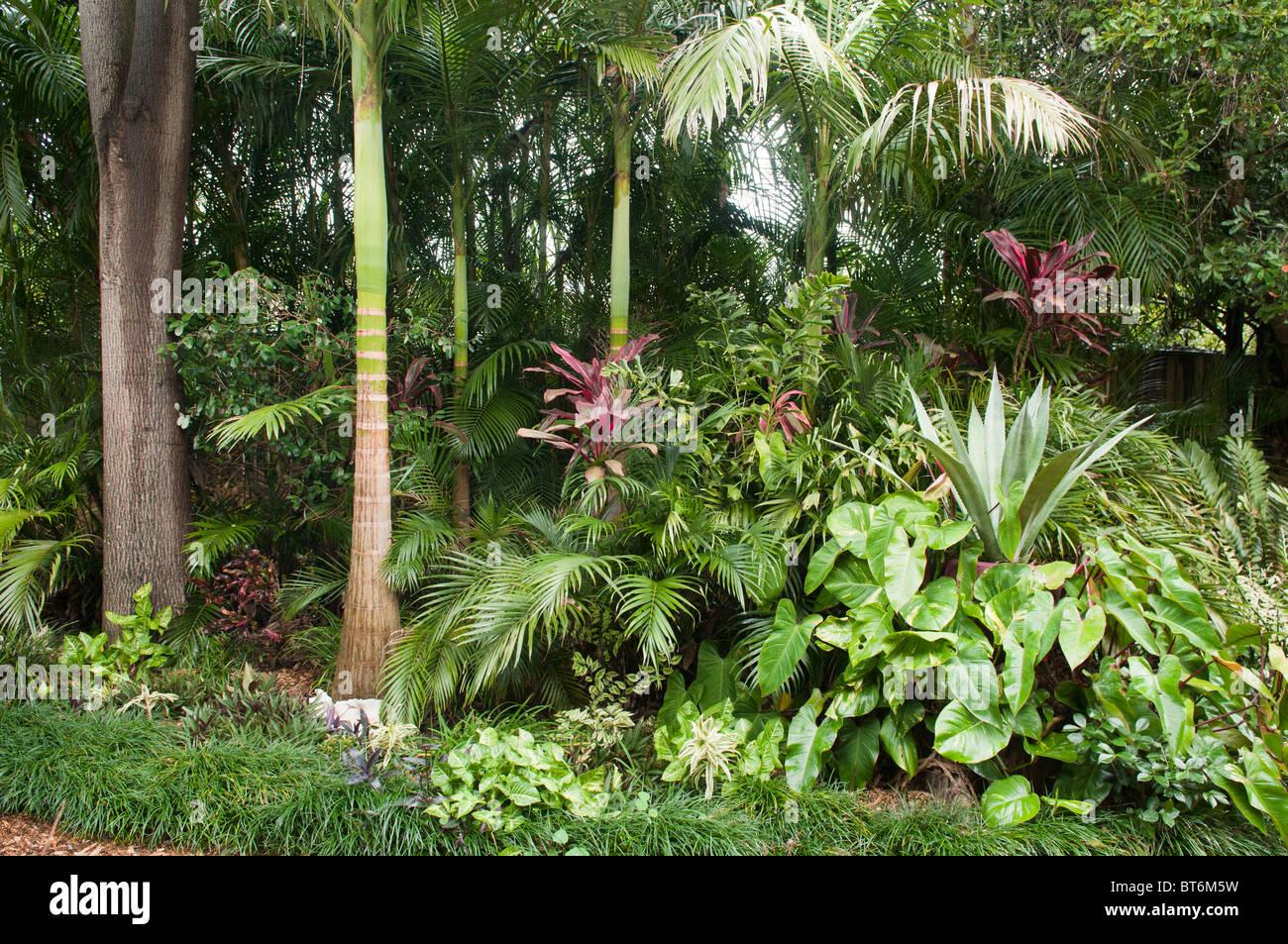 Subtropical suburban backyard, Brisbane, Queensland, Australia - Stock Image