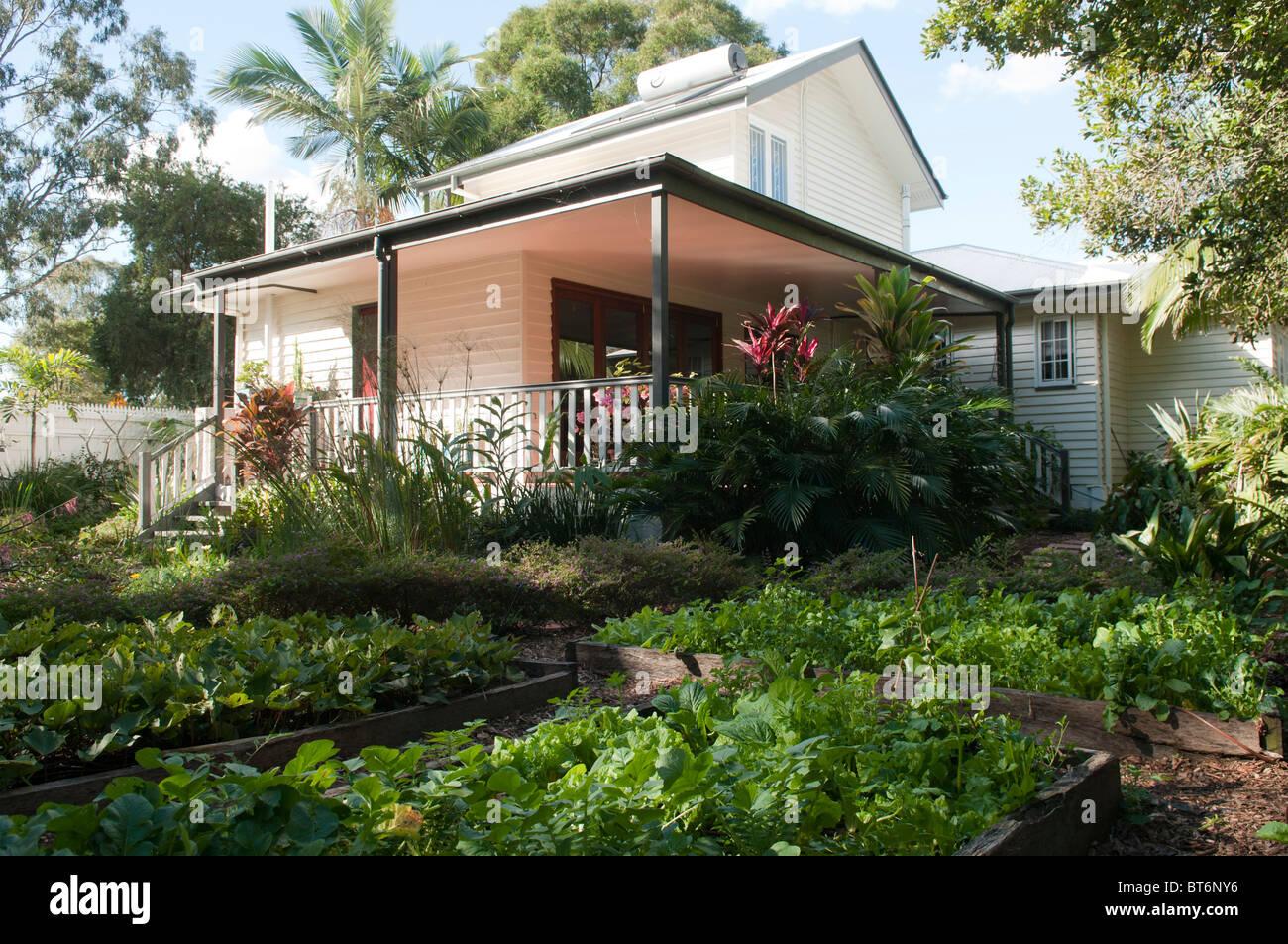 Vegetable garden and suburban home, Brisbane, Queensland, Australia - Stock Image
