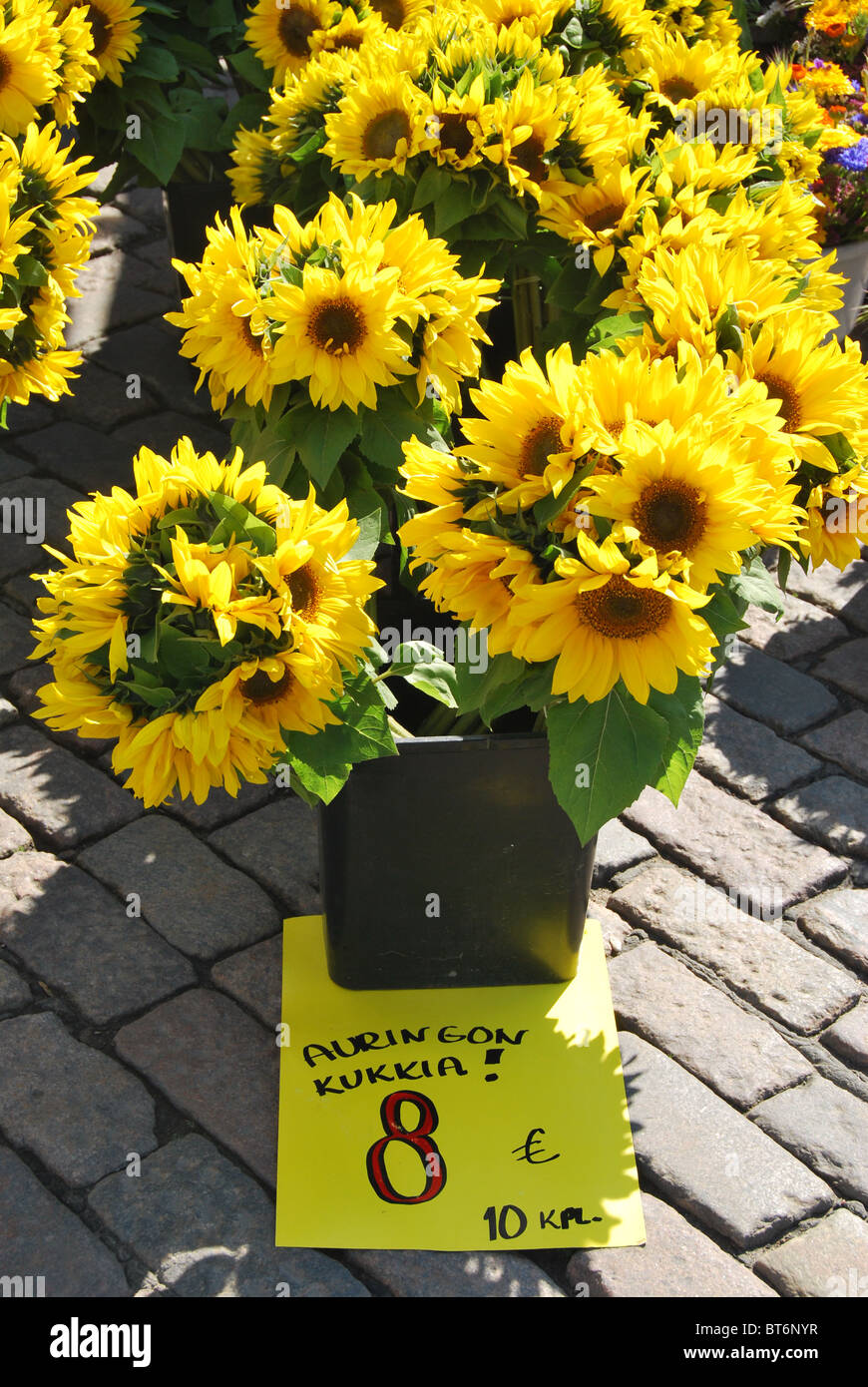 Sunflowers for sale at the Market Square (Kauppatori) in Helsinki, Finland. - Stock Image
