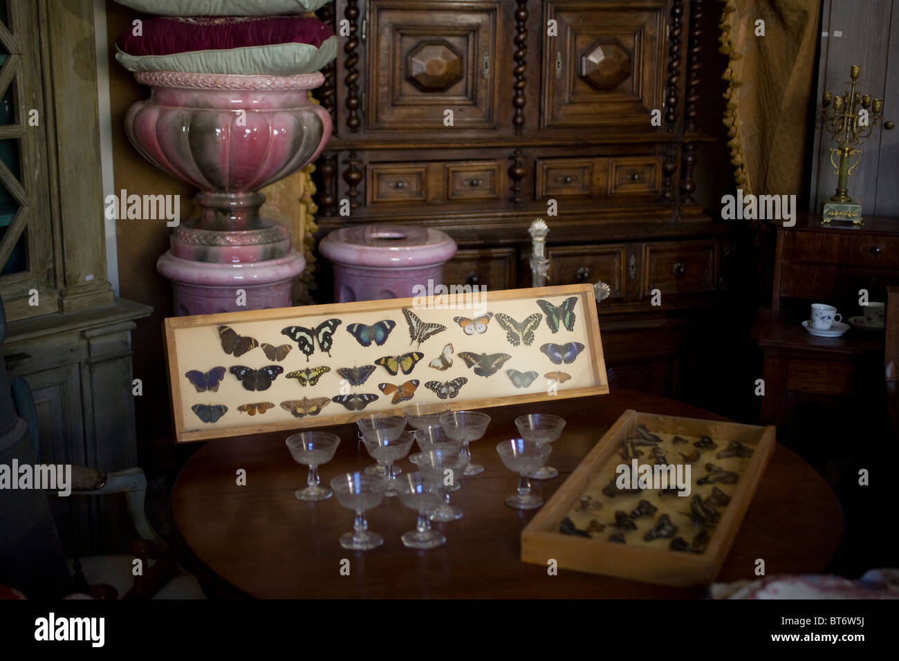 A collection of pinned exotic butterflies in an antique shop in Uzes France - Stock Image
