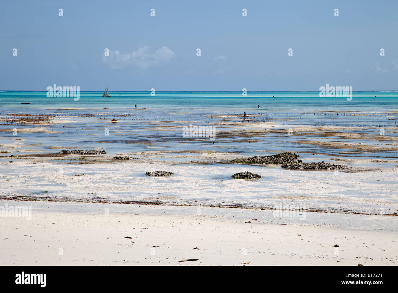 Jambiani, Zanzibar, Tanzania. Tide Flats at Low Tide.  Women cultivate seaweed on these tide flats for export. - Stock Image
