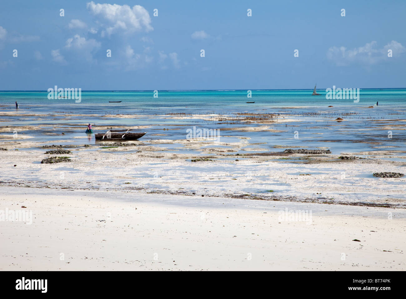 Jambiani, Zanzibar, Tanzania. Low Tide on the Eastern Side of the Island. Women cultivate seaweed on these tide Stock Photo