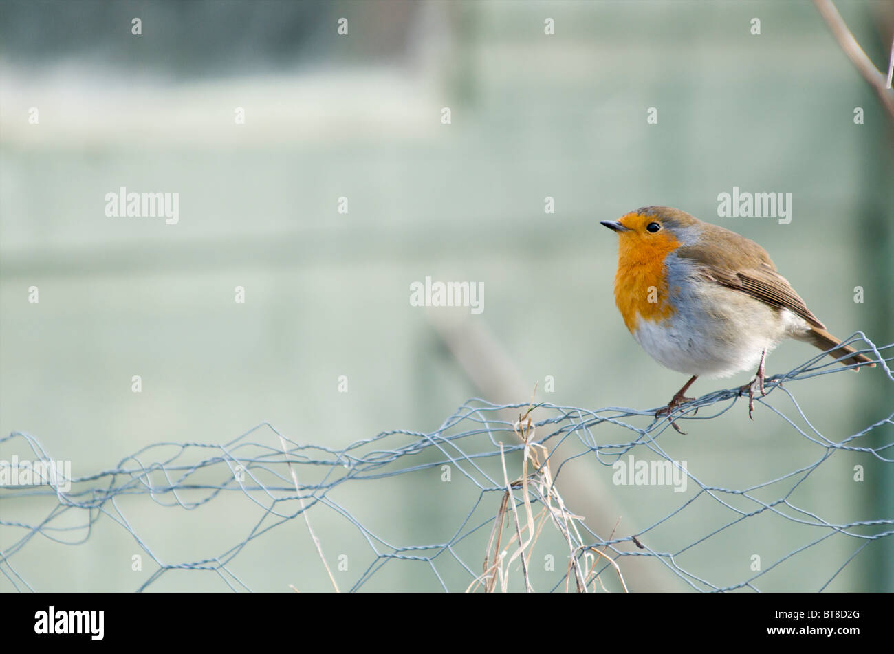 Wire Fence Garden Stock Photos & Wire Fence Garden Stock Images - Alamy