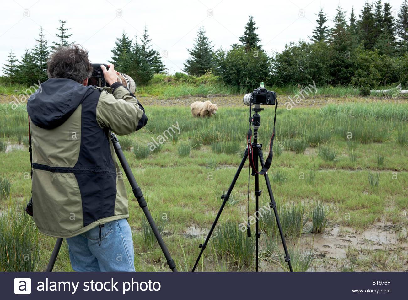 Alaskan Wildlife Photographer, Ron Niebrugge Photographing Grizzly Bear, Lake Clark National Park, Alaska - Stock Image