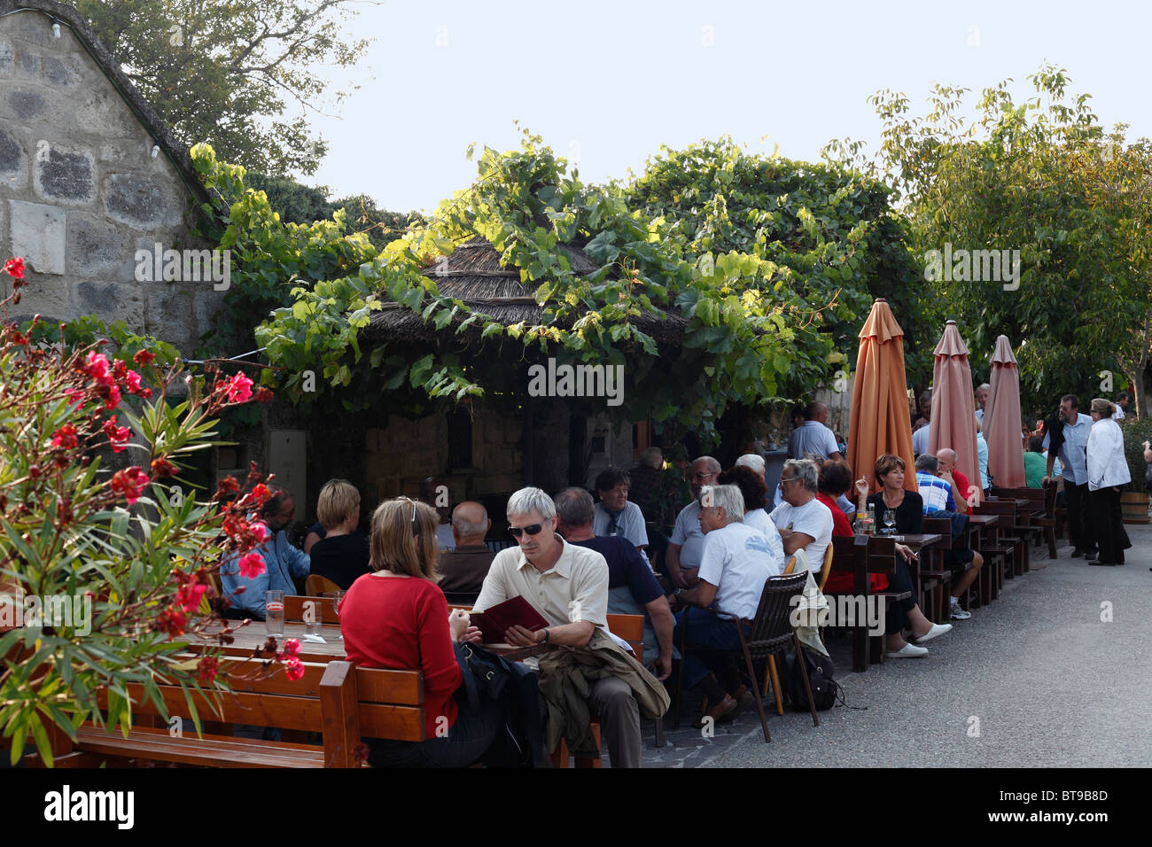 Tavern In The Kellergasse Alley In Purbach Am Neusiedler See Lake