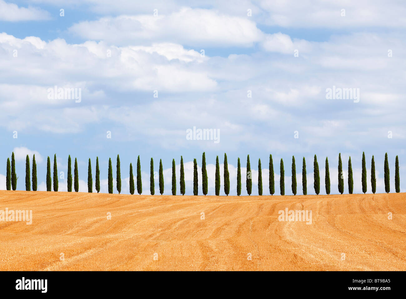 Cypress trees on hill, Tuscany, Italy - Stock Image