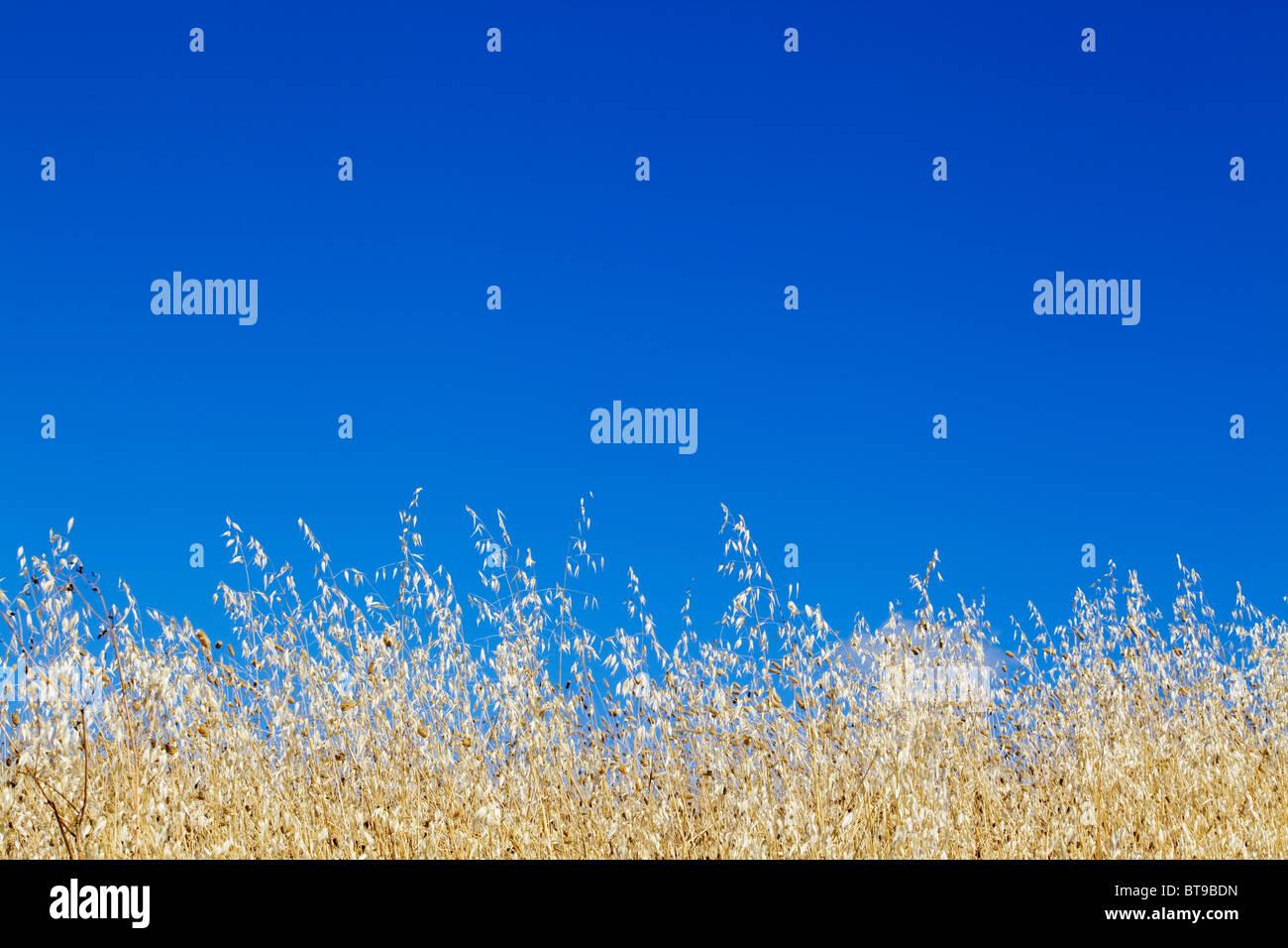 Summer Day - Tuscany, Italy - Stock Image