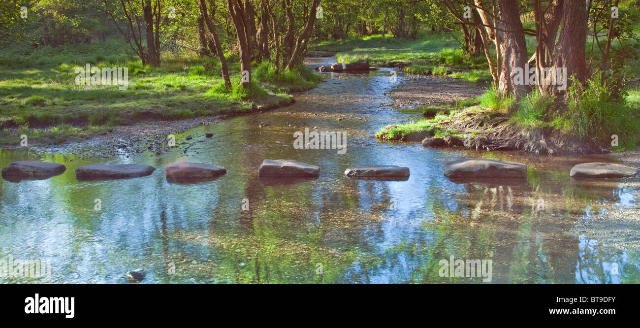 Stepping Stones across Blue watersSher Brook in early summer Cannock Chase Country Park AONB (area of outstanding - Stock Image