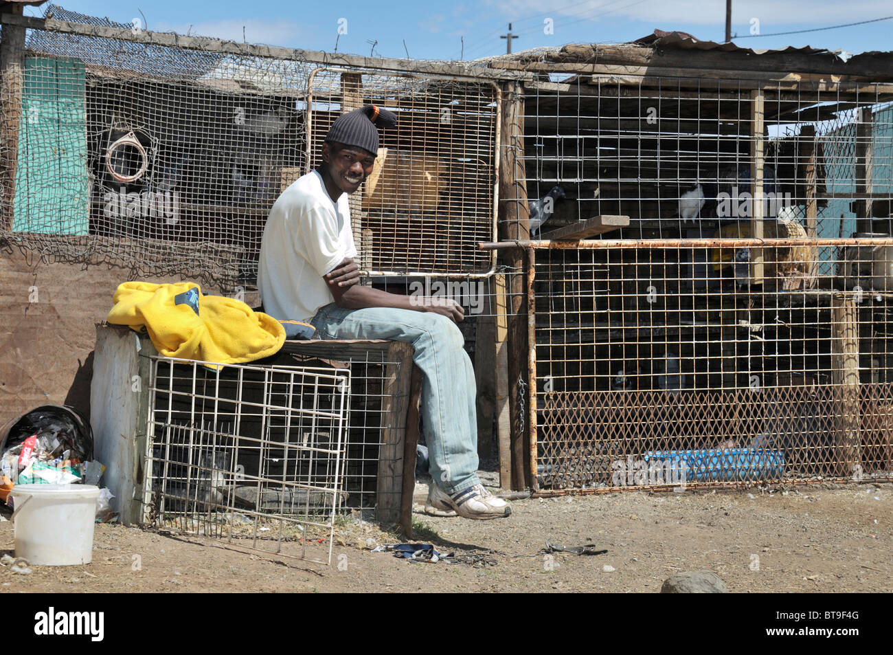 Slum, township, young man breeding pigeons in the backyard, Queenstown, Eastern Cape, South Africa, Africa - Stock Image