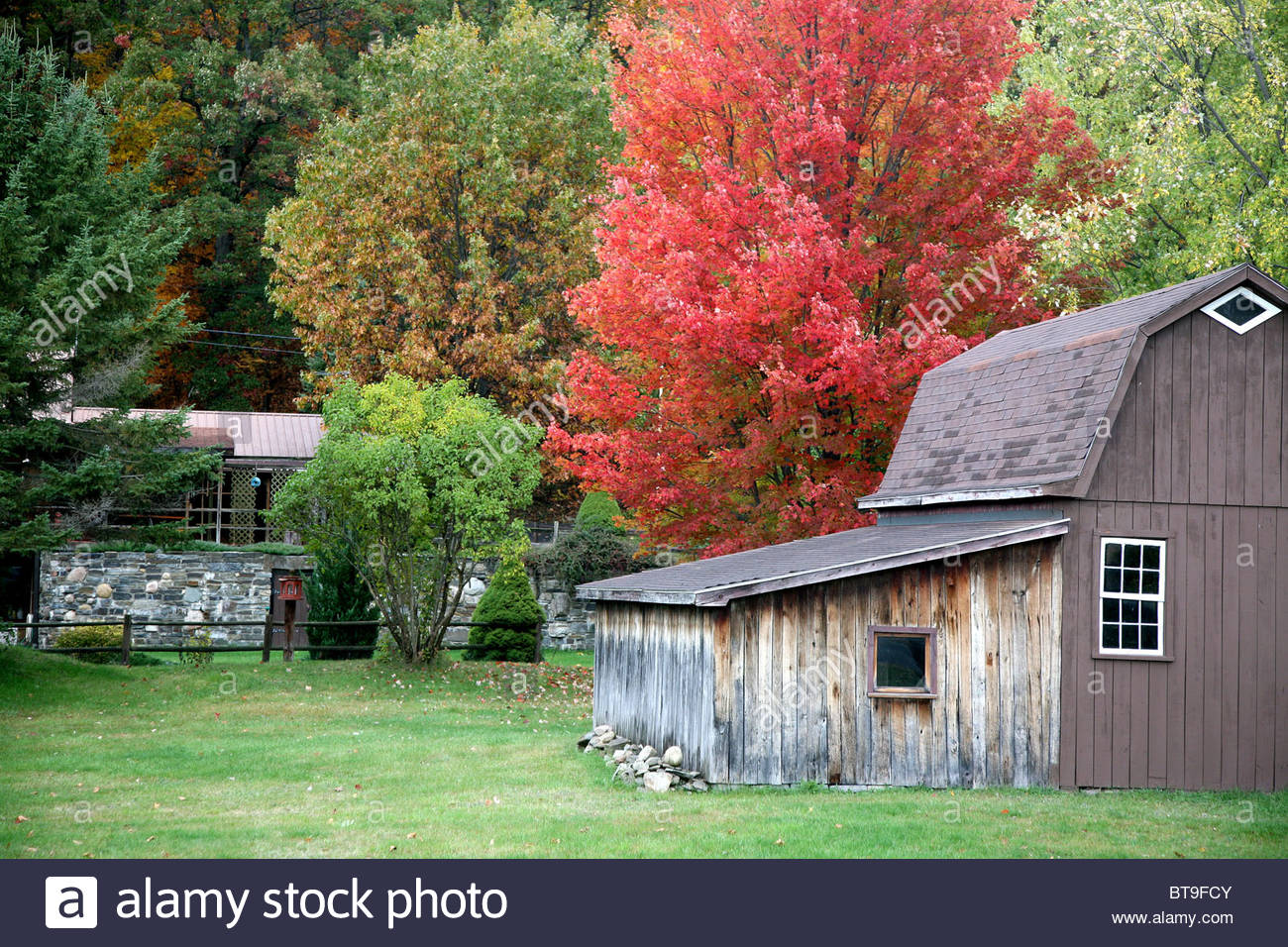 Leaves Turn Color On Trees Stock Photos & Leaves Turn Color On Trees ...