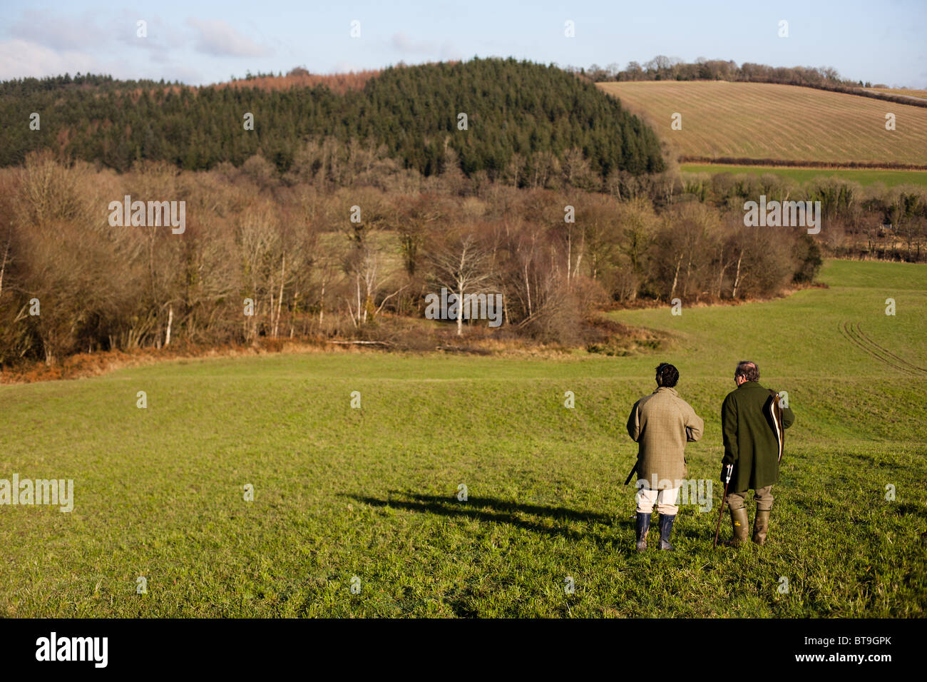Pheasant and Duck Shooting in Devon - Stock Image