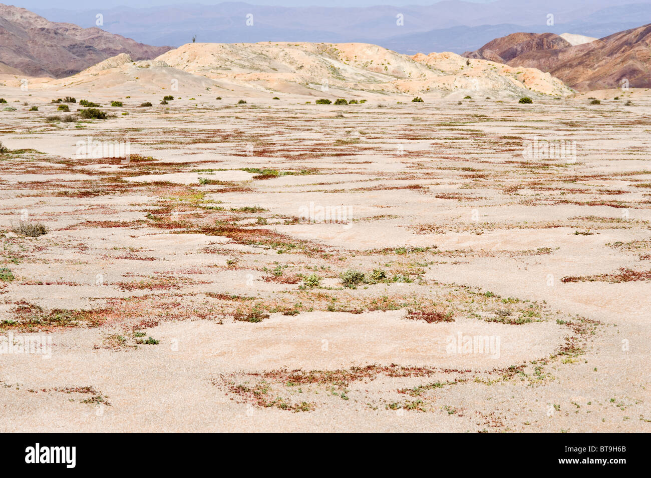 Hills on the way to Los Lomitas are coloured by minerals Parque National Pan de Azucar Atacama  Chile South America - Stock Image