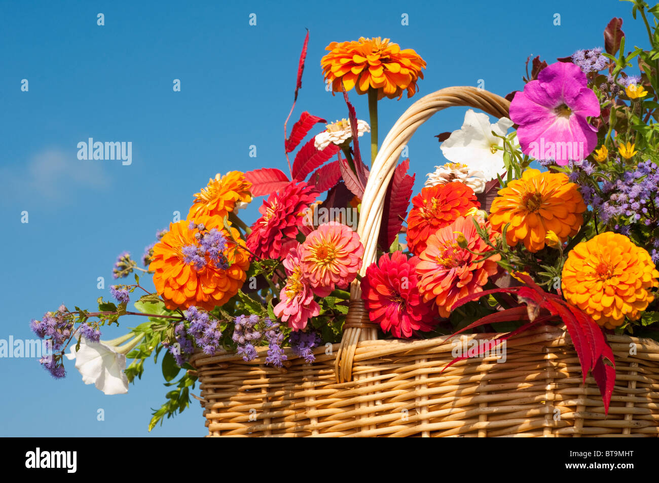 Brilliant pink flowers stock photos brilliant pink flowers stock beautiful bright fall flowers in a wicker basket against blue skies stock image izmirmasajfo