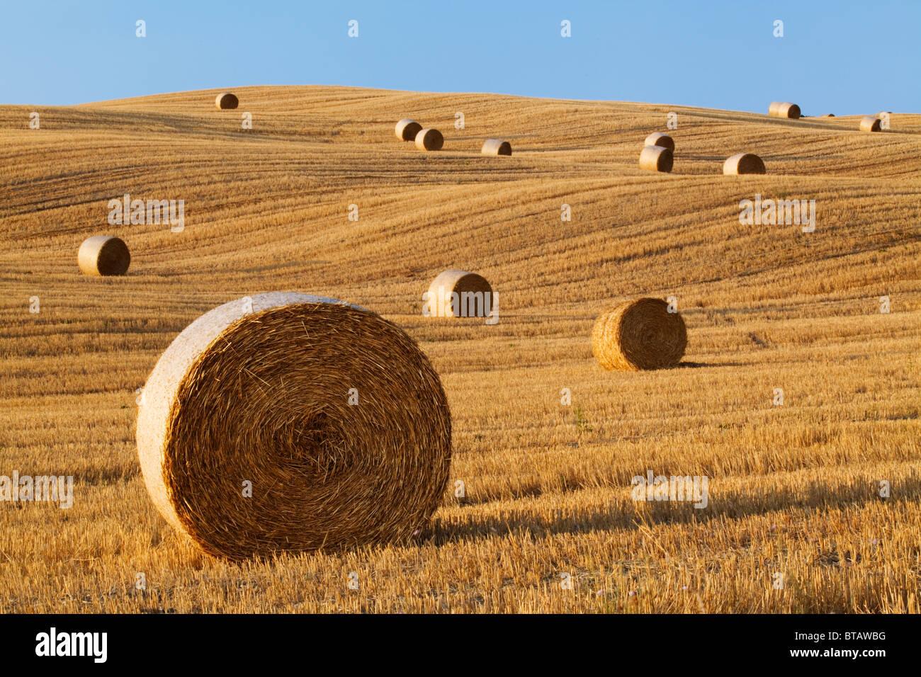 Hay rolls in a field near Pienza, Tuscany, Italy - Stock Image