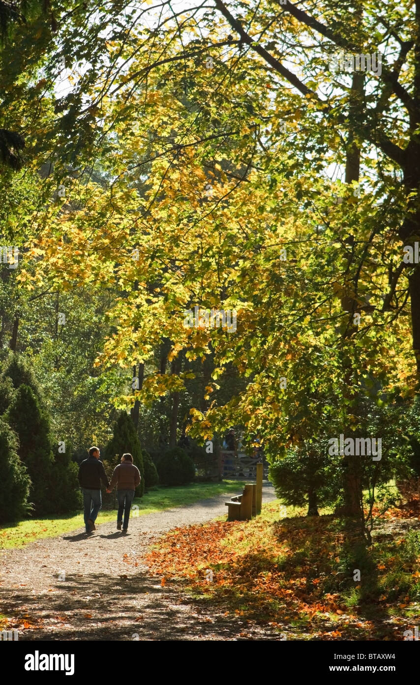 Young Couple Walking Hand in Hand Through the Autumn Colours at Bedgebury National Pinetum - Stock Image