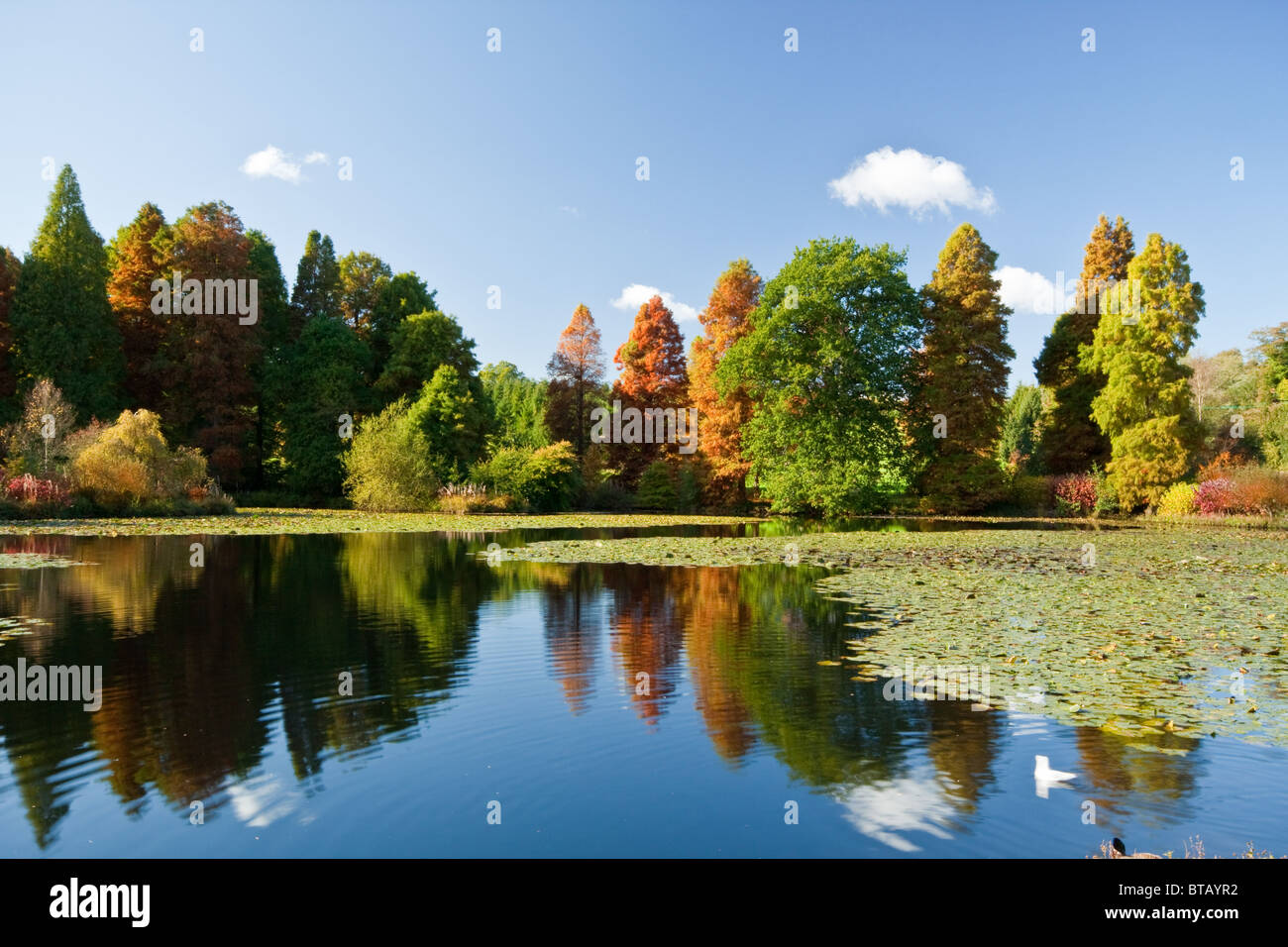 Autumnal Colours at Marshalls Lake in Bedgebury National Pinetum - Stock Image