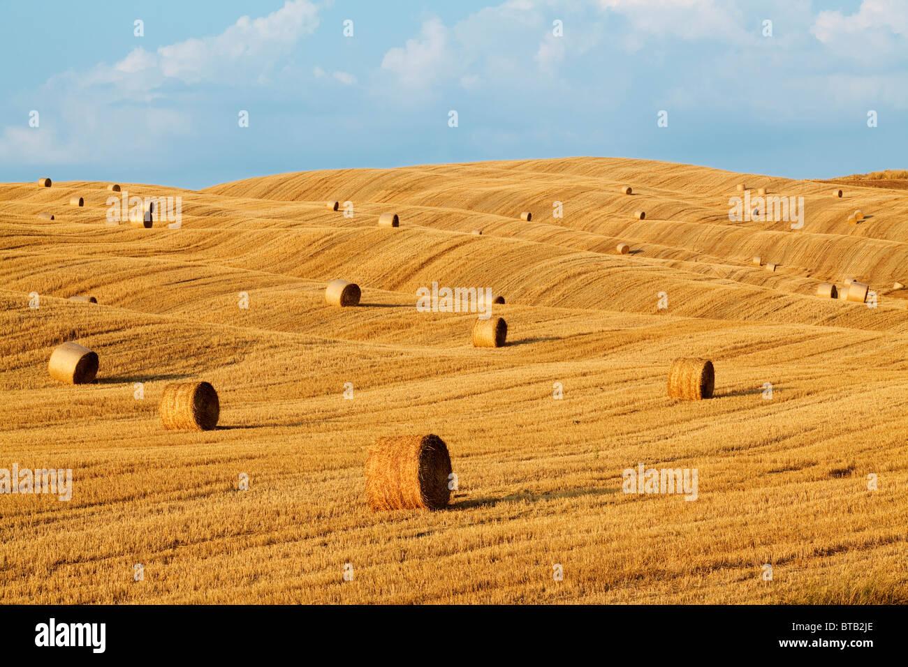 Hay rolls in a field near Pienza - Tuscany, Italy - Stock Image