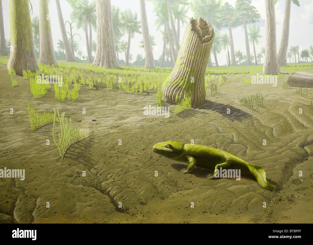 Artist rendering of the Lungfish(dipnoan) - Devonian period - Stock Image