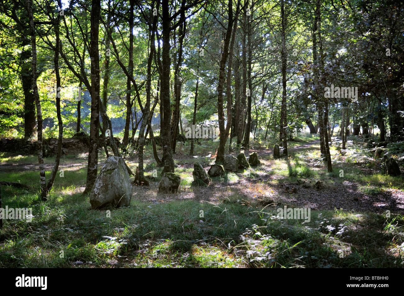 The petit-menac section of the alignment of standing stones at Carnac, Brittany, Frnace - Stock Image