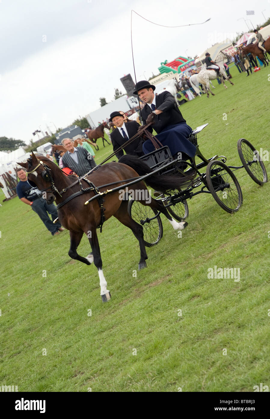 hackney carriage pony at the orsett county show - Stock Image