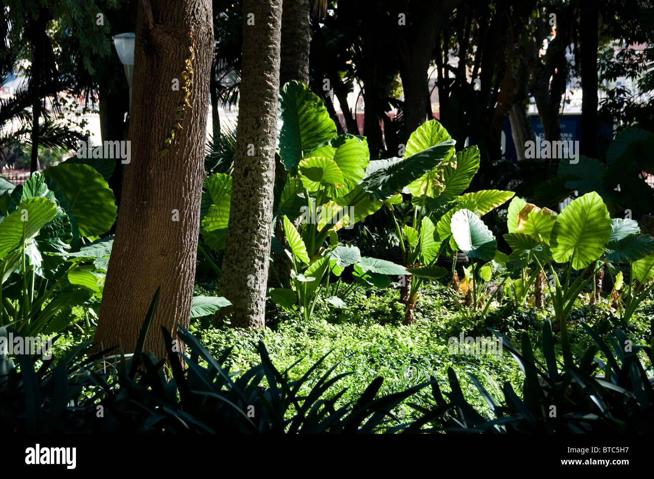 Spain Andalusia Malaga Park Garden Sea Front trees - Stock Image
