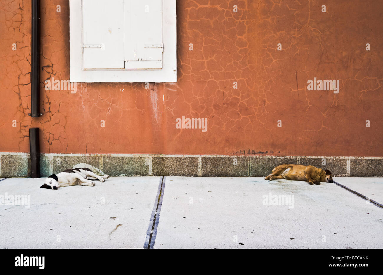 Two dogs sleepig in the old town of Kotor (Montenegro) - Stock Image