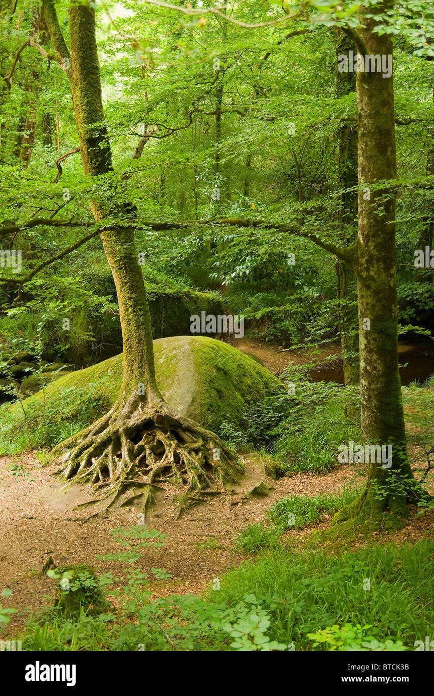Deep forest in Brittany, France - Stock Image