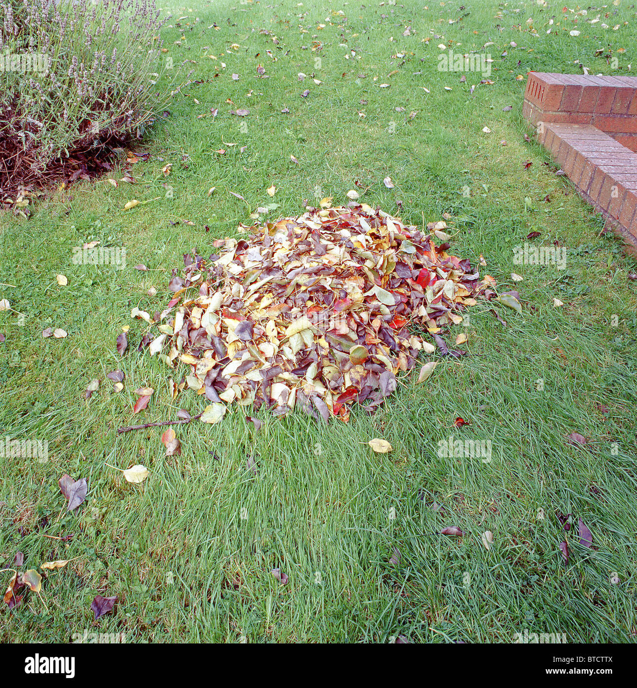 Pile of Leaves on a domestic lawn - Stock Image