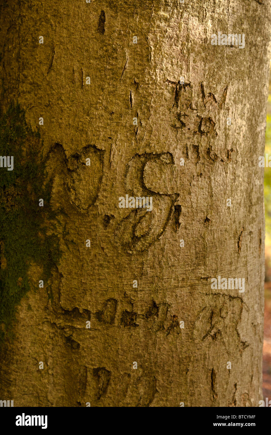 carving on tree trunk - Stock Image