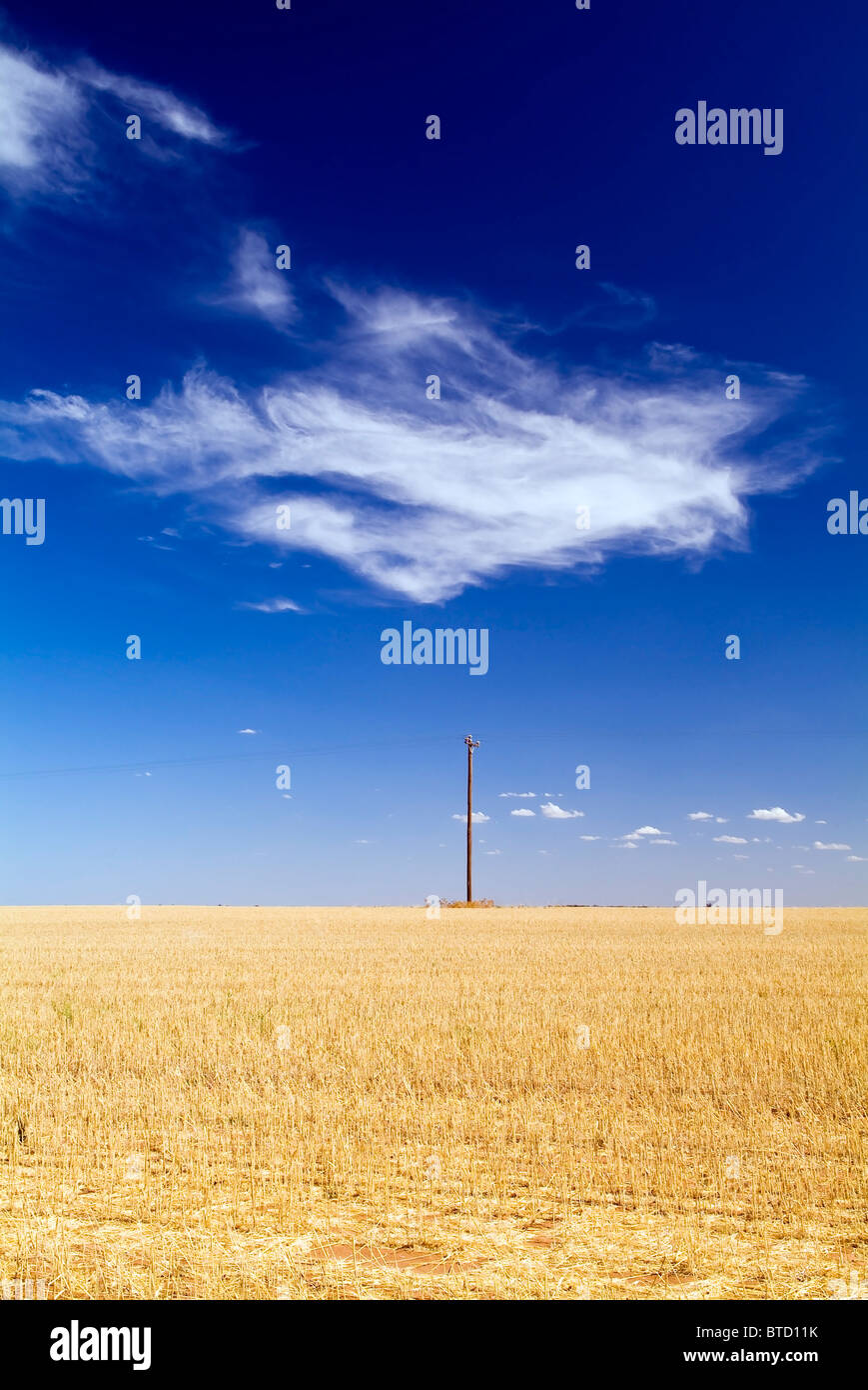 Wheat fields in country Australia with a single power pole and cloud - Stock Image