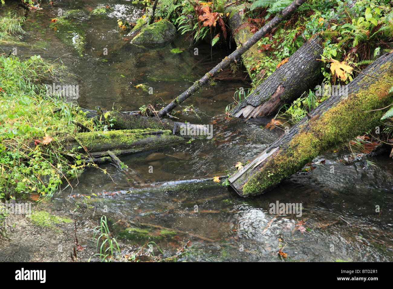 'Fish Logs' have been placed in an Oregon stream to provide habitat for trout and other native fish. - Stock Image