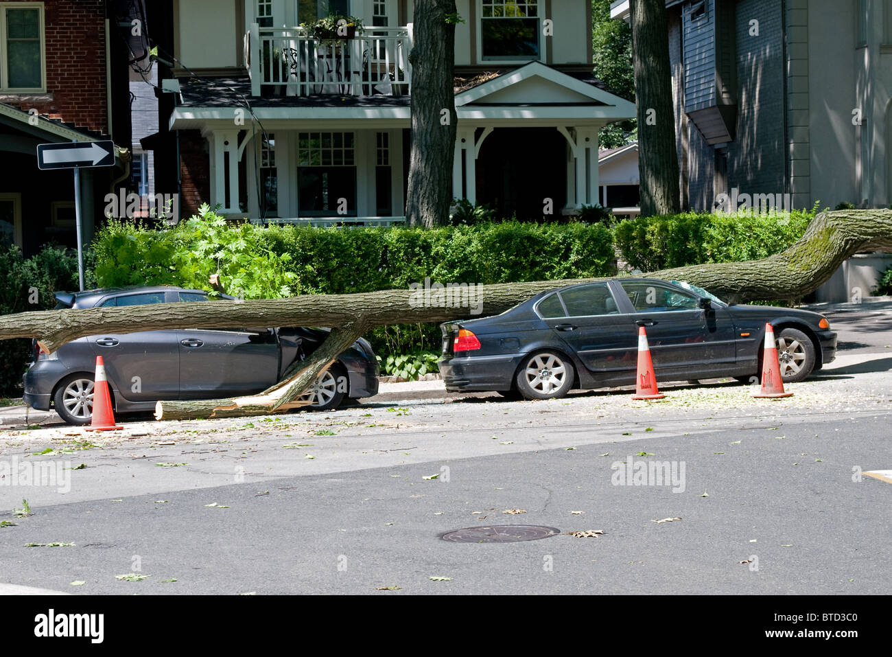 Two cars crushed by a fallen tree Stock Photo
