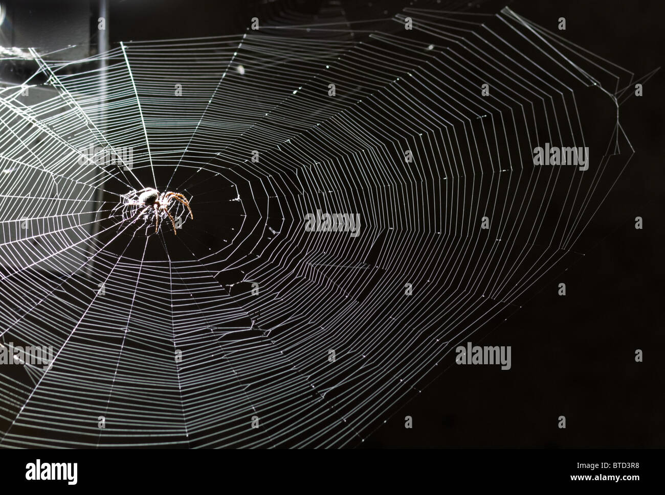 Spider on web at night. - Stock Image